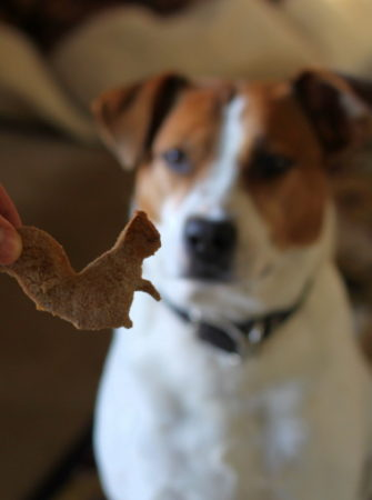 Homemade Pumpkin Dog Biscuits