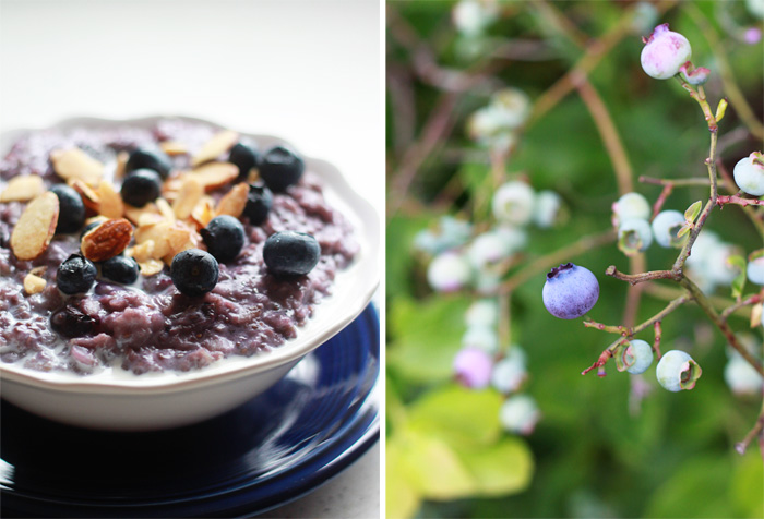Blueberries and Cream Oatmeal (a.k.a. Purple Oatmeal) + 3 Tips For the Creamiest Oatmeal