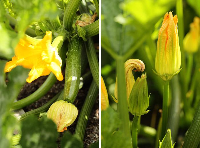 7-minute-sauteed-zucchini