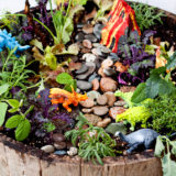 how-to-make-a-dinosaur-garden3