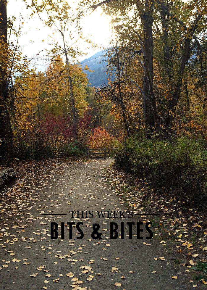 bits-and-bites-20161102