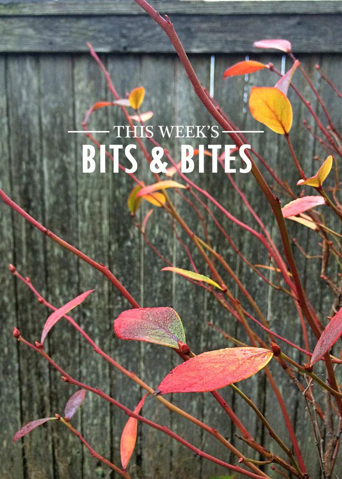 bits-and-bites-20161118