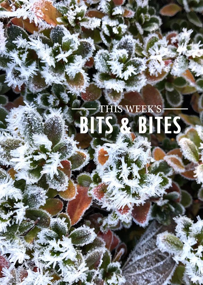 bits-and-bites-20161209